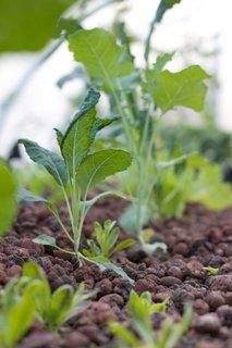 Aquaponics-farm-organic-plant