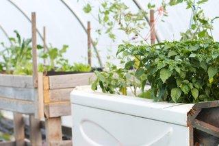 Aquaponics-farm-organic-system