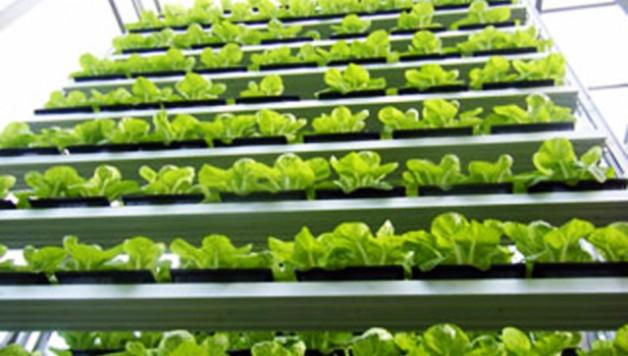 Sky-Greens-Singapore-Commercial-Vertical-Farm