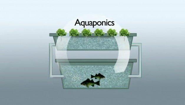 introduction-to-aquaponics