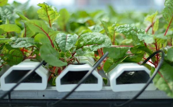 Essential Nutrients For Soilless Growing Powerhouse