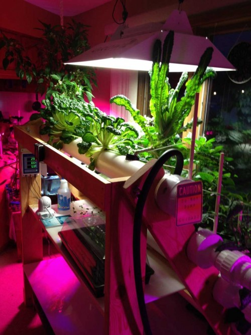 home-hydroponics-system-indoor-gardening