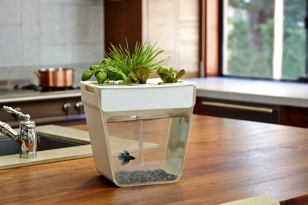 aqua-farm-automated-hydroponic-gardening-system