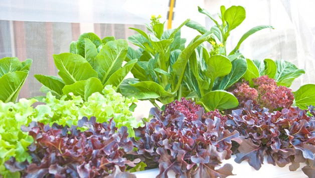 cultivate-optimal-growing-conditions-hydroponic-gardening