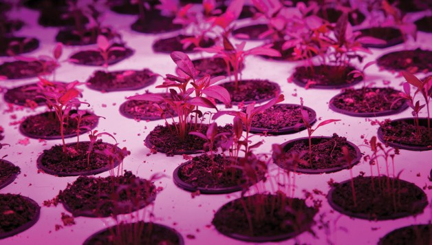 led-lighting-technology-healthy-plant-growth