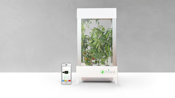 niwa-automated-hydroponic-gardening-system