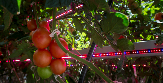 LED-horticultural-lighting-benefits