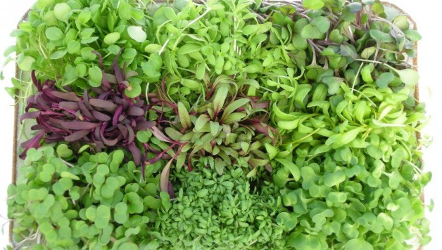 Micro-greens-health-benefits
