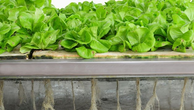 aeroponics-101-soilless-gardening-technology