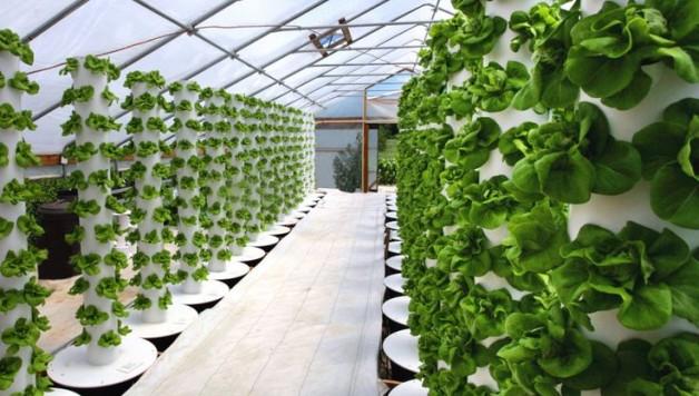 aeroponics-technology-soilless-gardening