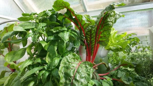 art-garden-soilless-gardening-food-production
