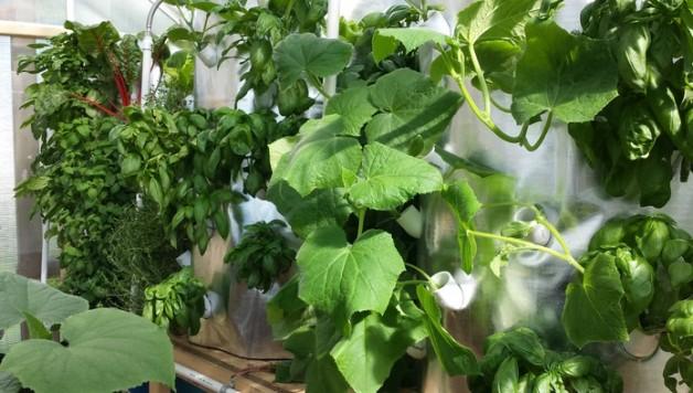 art-garden-soilless-gardening-system