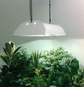 Indoor grow lighting. Image via Homemade Hydroponic Vegetables.