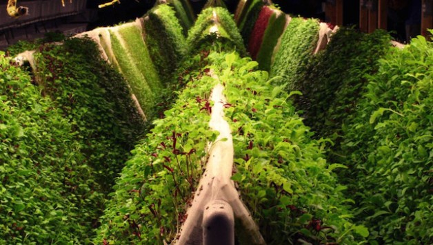 aeroponic-growing-food-production-farm