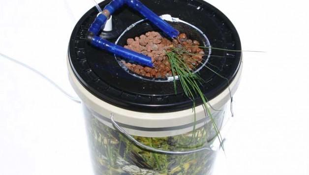diy-home-hydroponics-deep-water-culture