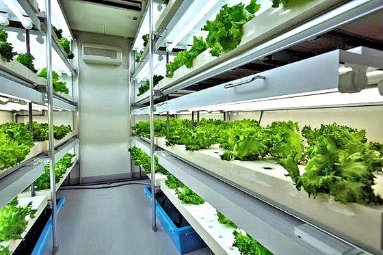 indoor-gardening-greenhouse-ballasts-lighting