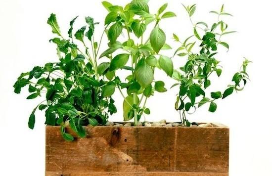 modern-sprout-planter-urban-gardening