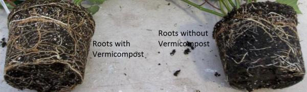 prorganix-roots-plant-growth-vermicast