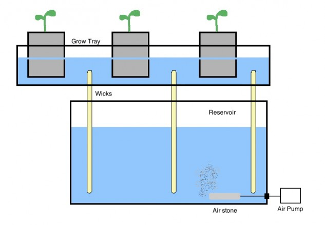 Hydroponic-Wick-System-for-beginners