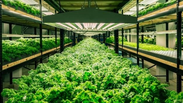 aquaponics-closed-loop-indoor-food-production