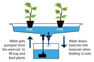 hydroponics-closed-loop-indoor-food-production-water-reuse