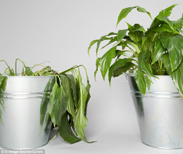 plant-stress-prevention-hydroponic-gardening
