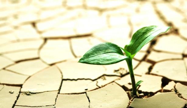 recognize-prevent-plant-stress-hydroponic-gardening