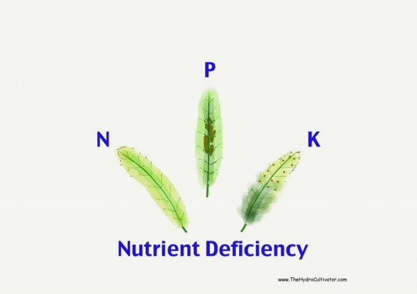 Nutrient Deficiency Hydroponic Plants