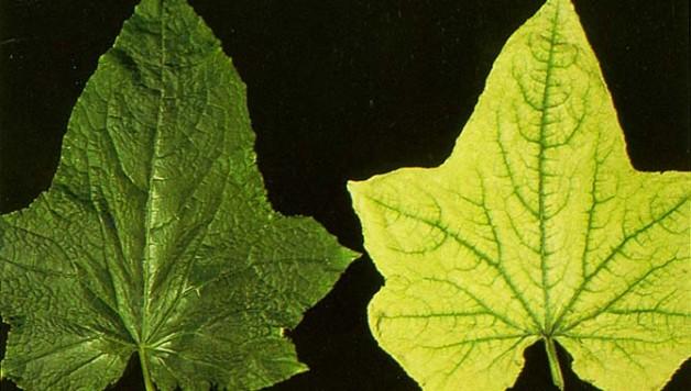nutrient-deficiency-treatment-plants