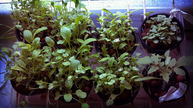 urban-farming-benefits-increases-food-security