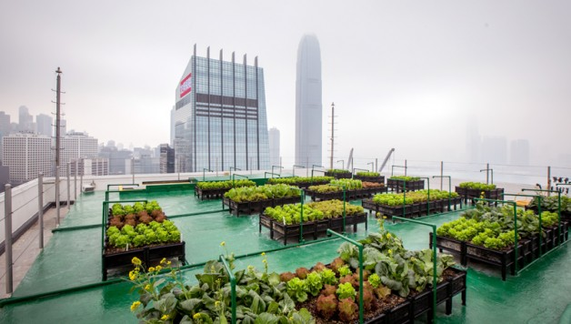 urban-farming-maximizes-city-space