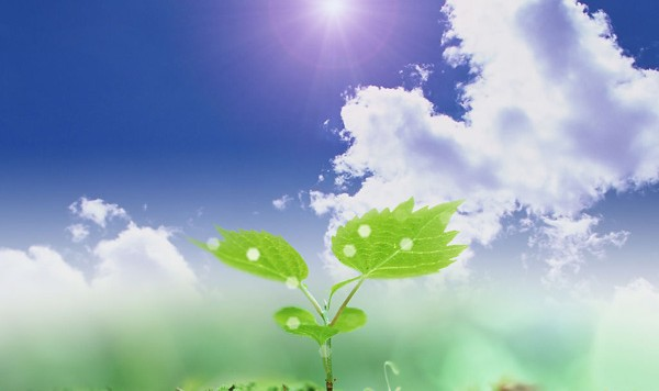 environmental-benefits-of-commercial-hydroponics