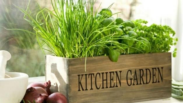 indoor-winter-gardening-tips