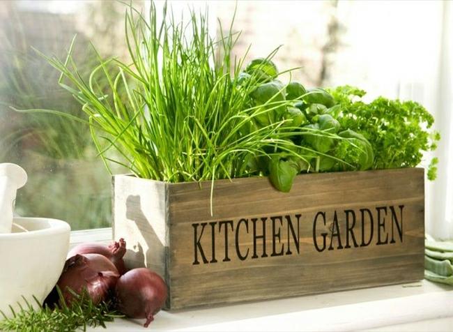 10 Indoor Winter Gardening Tips