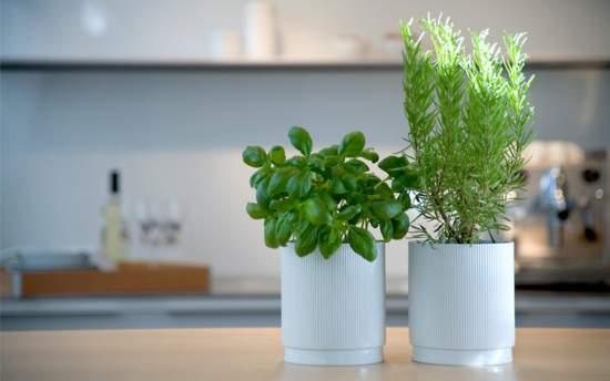 winter-gardening-tips-growing-indoors
