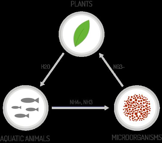 aquaponics-cycle
