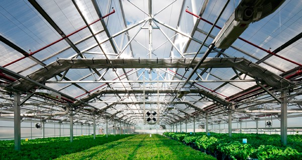 gotham-greens-building-integrated-agriculture