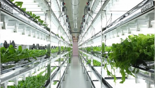 toshiba-lettuce-factory-building-integrated-agriculture