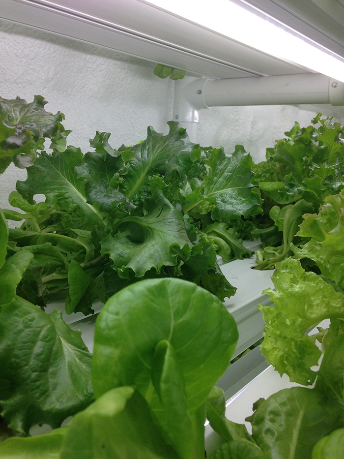 Local_fresh_food_PowerHouseHydroponics