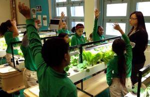 Youth learning hydroponics. Image source: MySuncoast