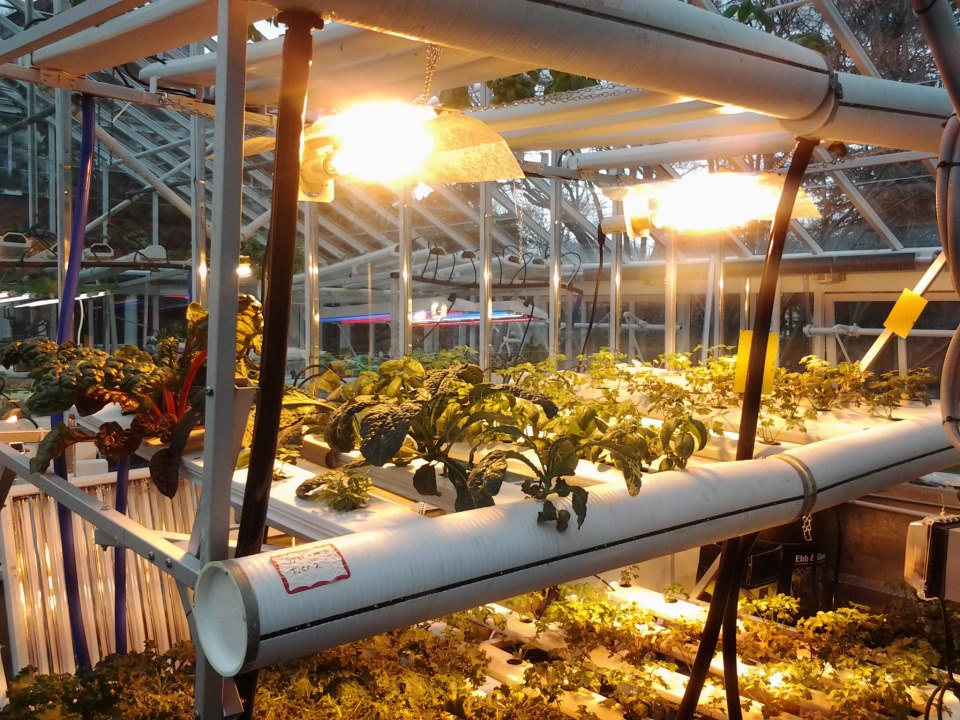 Engaging Youth In Hydroponics