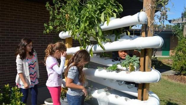 Youth hydroponic education. Image via Paula Shrum