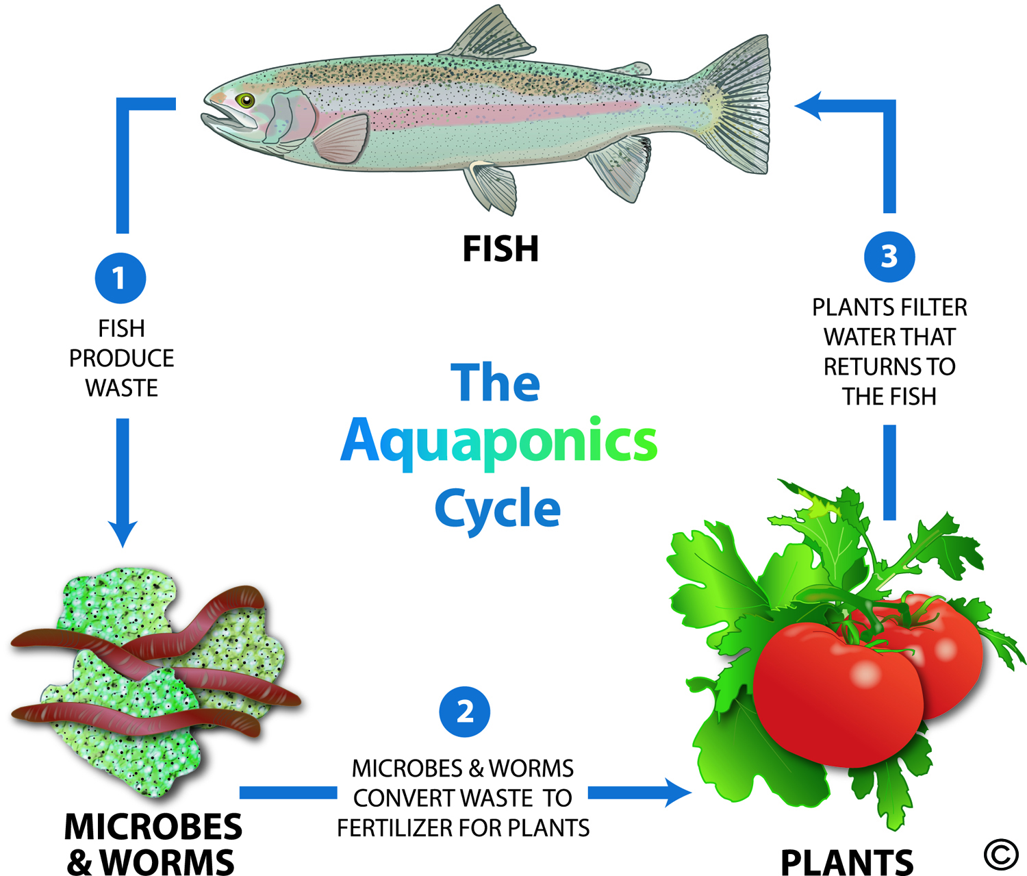 closed-loop-aquaponics-system
